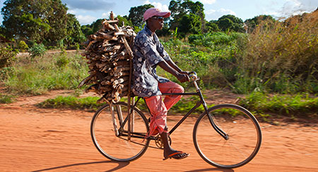 Man on bicycle with firewood on back