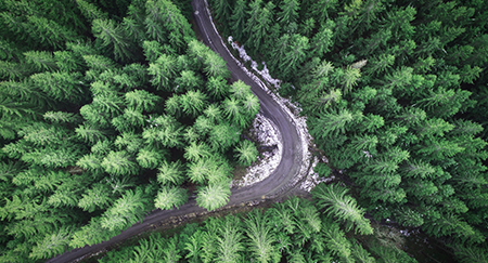 Vista aérea de una carretera vacía rodeada de árboles verdes